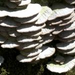 CIMG0318  lichens